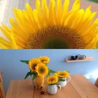 Friday-Flowerday – oder – Die Zeit für Sonnenblumen ist da