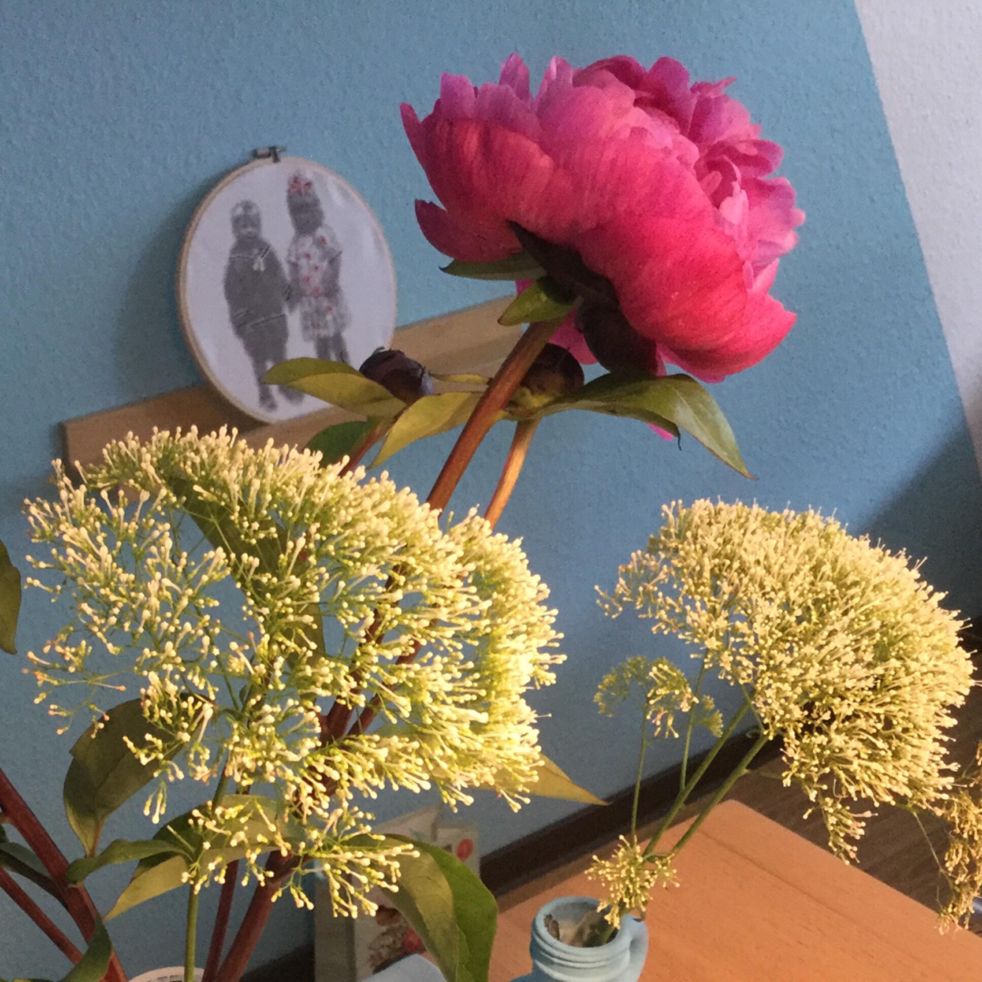 Friday-Flowerday – oder – Bestimmt die letzten Pfingstrosen