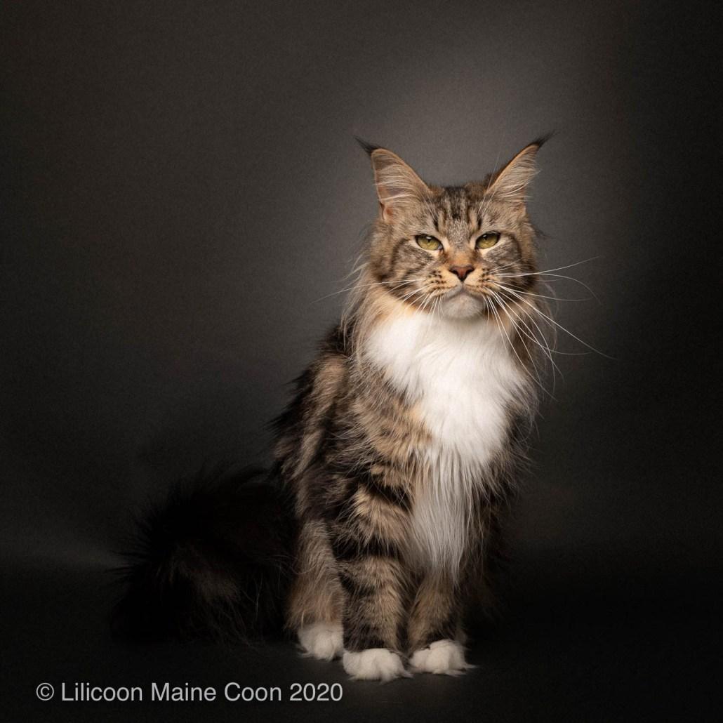 Lilicoon Vanille