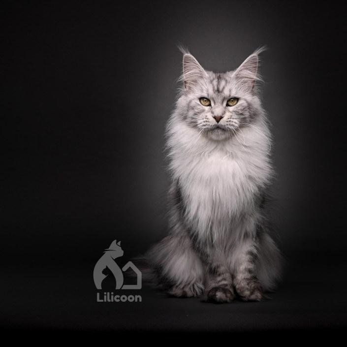 Lilicoon Béatrice
