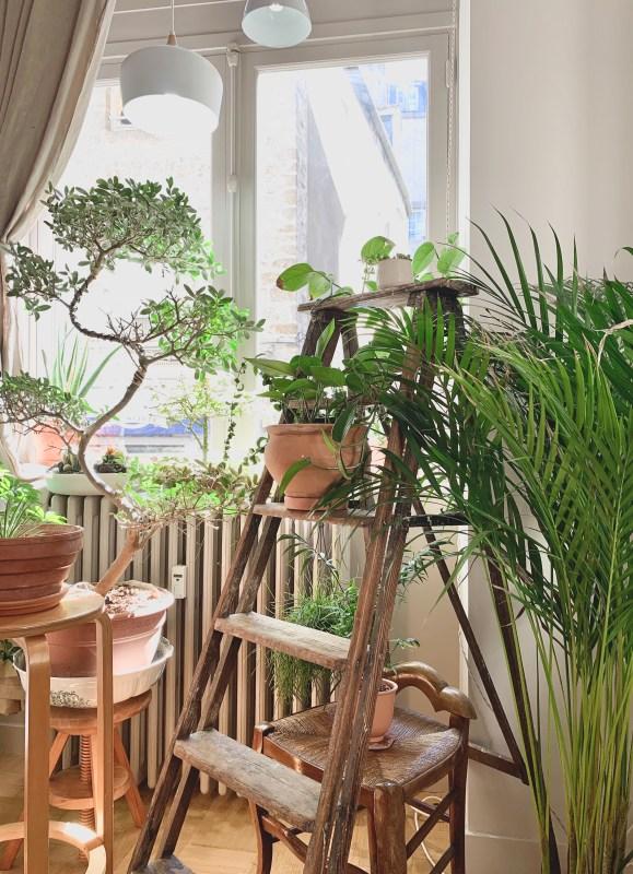 Petit jardin intérieur choubidoux