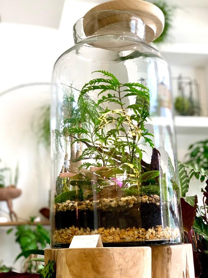Jardin sous verre kokenendo terrarium