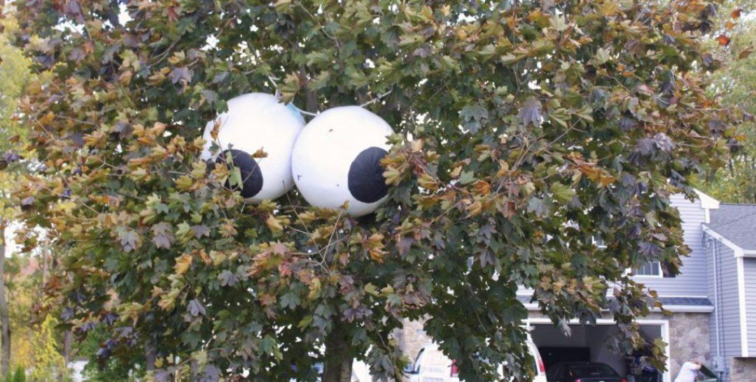 Eyes in trees