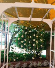 Arbor with Carnation Wall