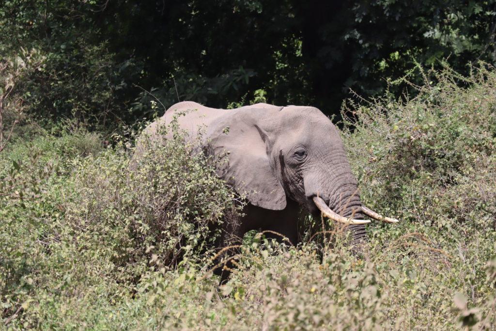 éléphants lac manyara tanzanie safari