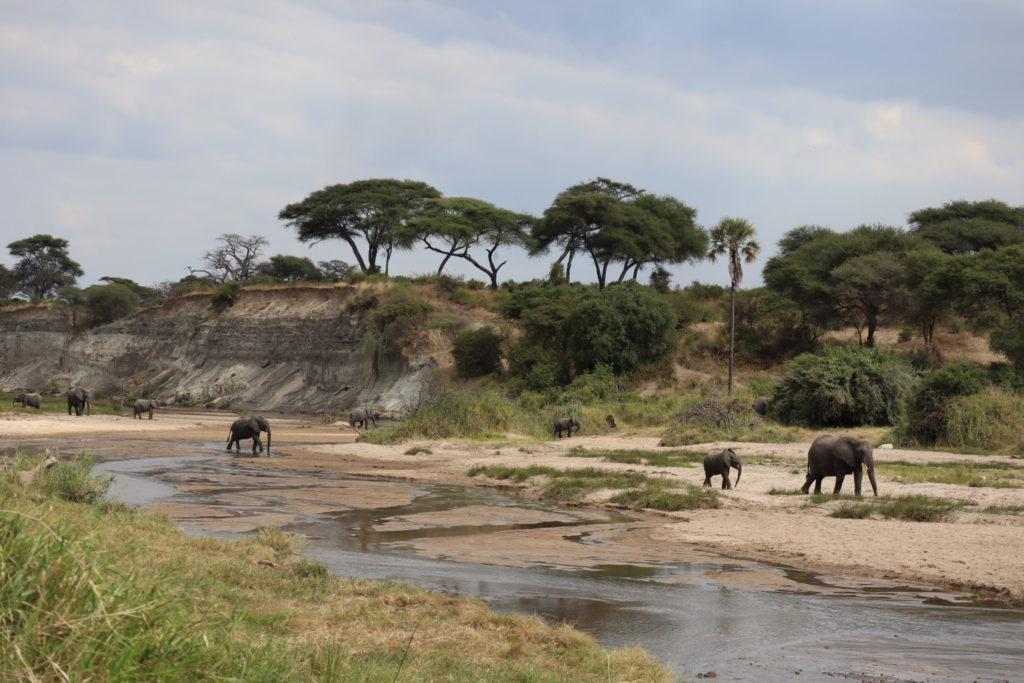 Paysage du tarangire lac tanzanie