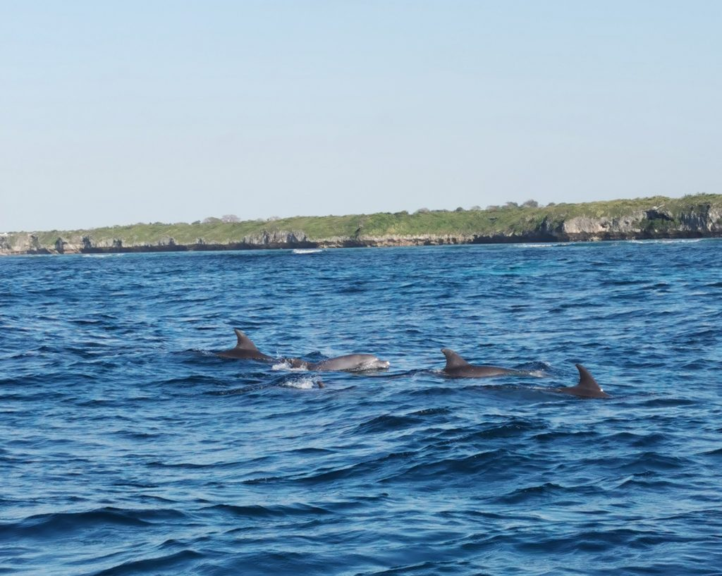 dauphins surface zanzibar