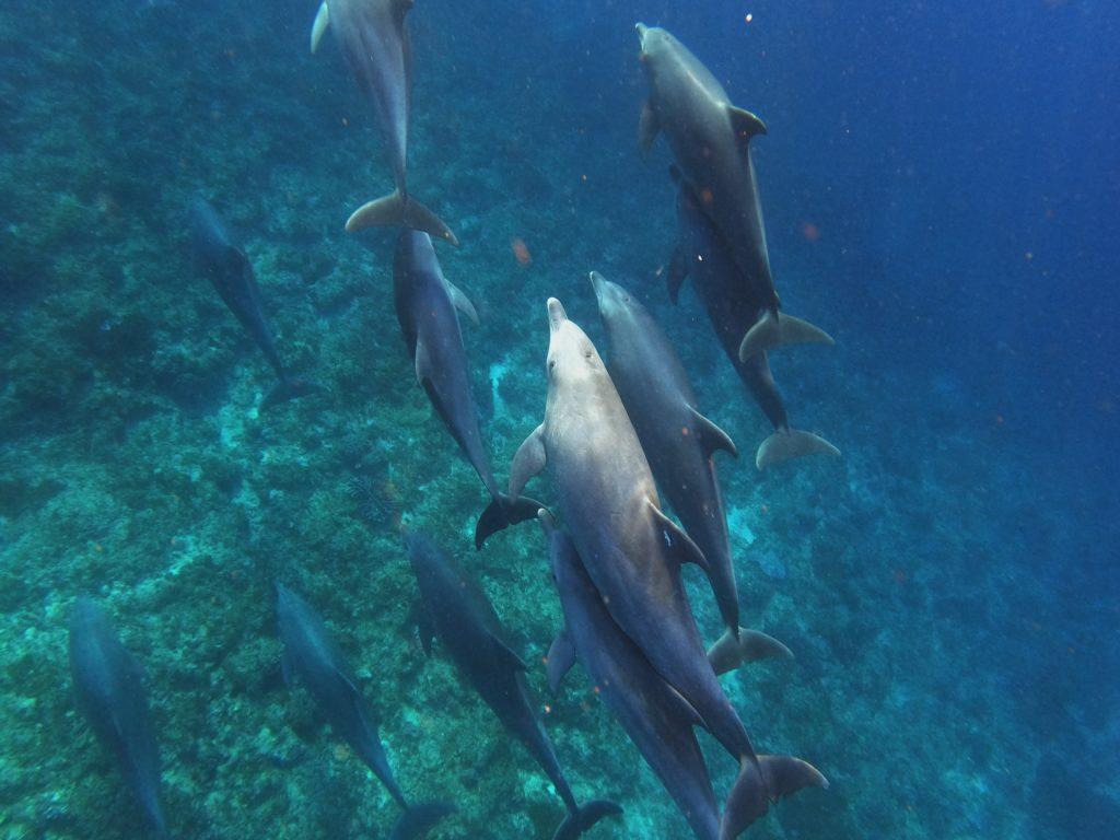 nager dauphins zanzibar