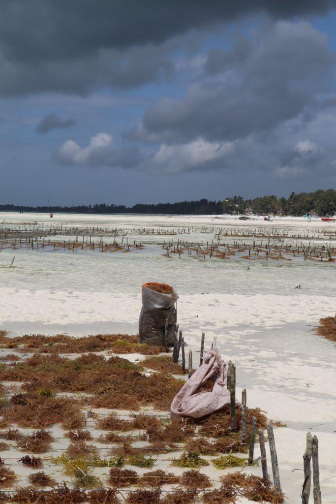 ferme algue paje zanzibar