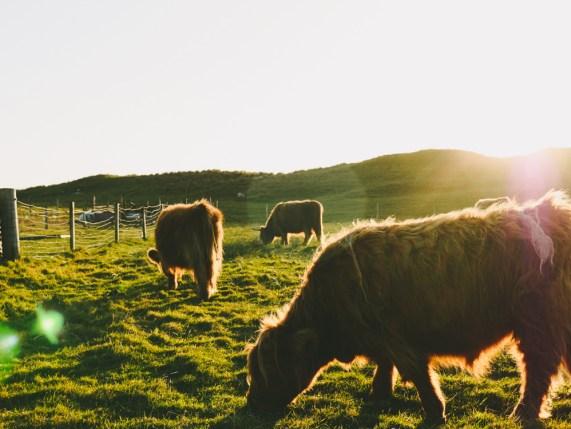road-trip-ecosse-skye-harris-scotland-liliinwonderland-22