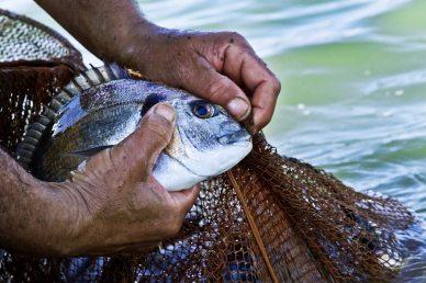 Pescatori di Orbetello rete
