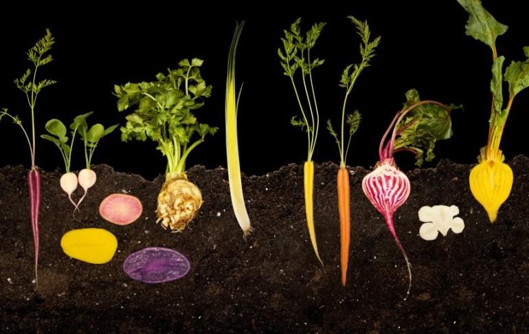 25 FOOD Tuberi, FOOD  La scienza dai semi al piatto. Courtesy Modernist Cuisine LLC
