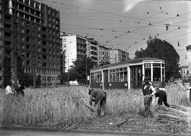 Orto di guerra a Milano con tram