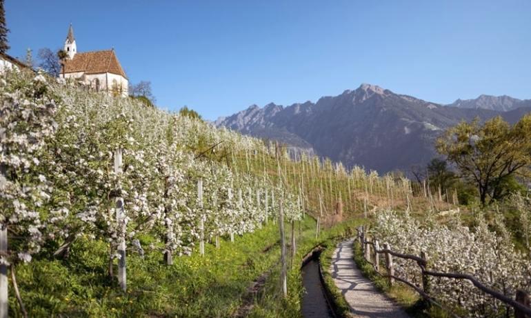 Strade del vino Trentino Val Venosta