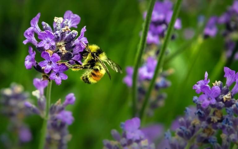 giornata-delle-api