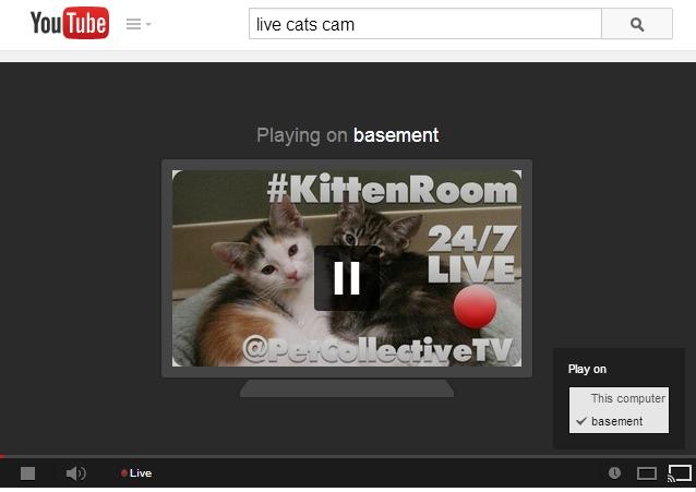 chromecast kittens