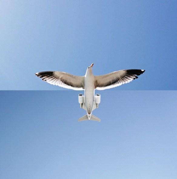 fast-seagull