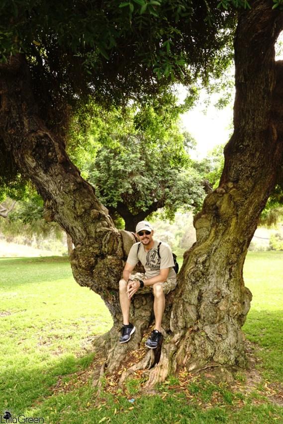 "Balboa Park ~ ""The Magic Trees"""
