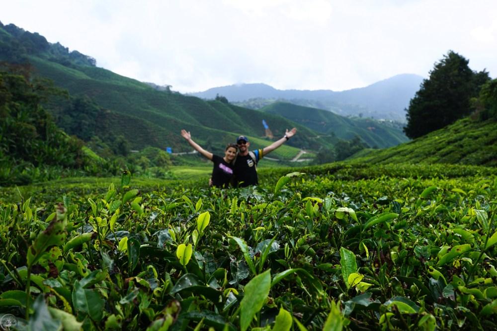 Malaysia, Cameron Highlands