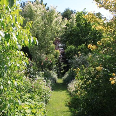 Le jardin des lianes - allée droite