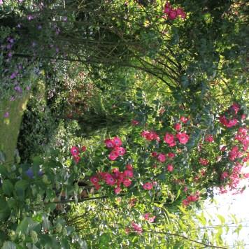 Le jardin des lianes - tonnelle