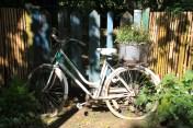 Le jardin des lianes - bicyclette