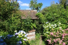 Le jardin des lianes - puits