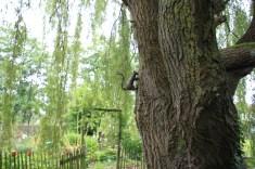 Le jardin de la goutte d'eau - écureuil