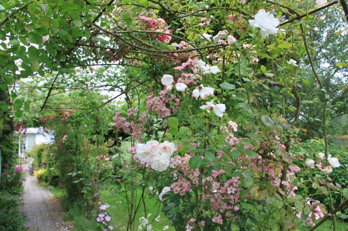 Le jardin de la goutte d'eau - couloir de roses