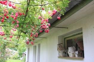 Le jardin de la goutte d'eau - nichoirs et roses