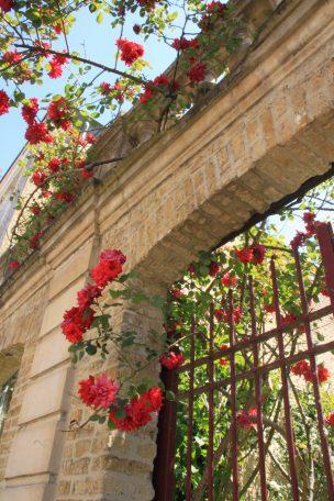 Saint-Omer - maison au rosier