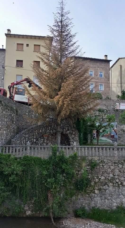 Talada Avet Pont Vell 001