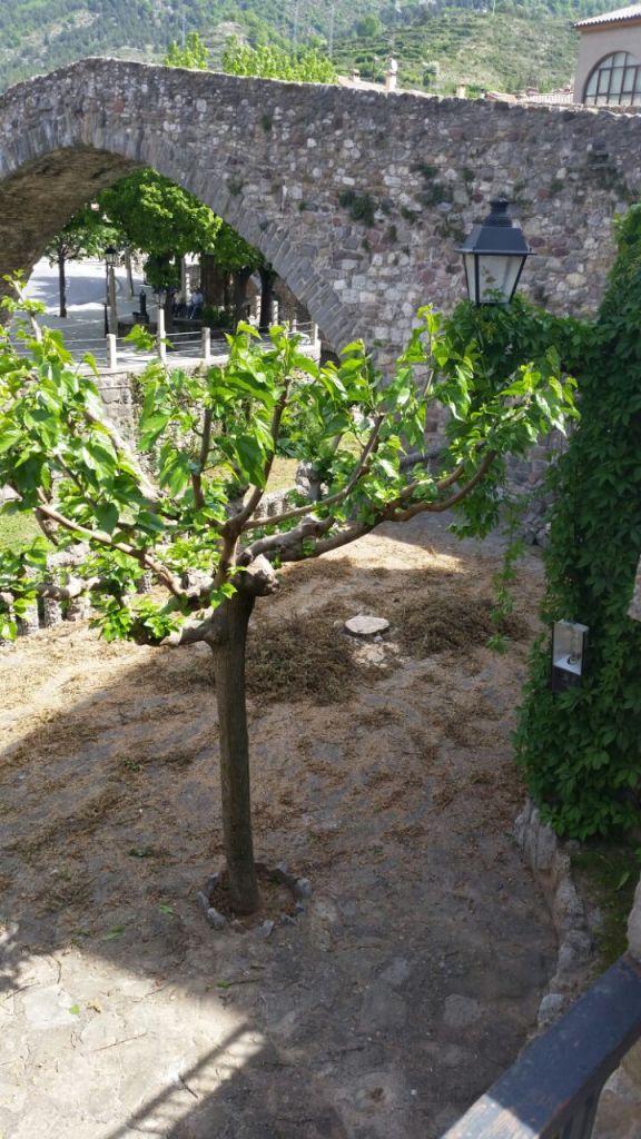 Talada Avet Pont Vell 006