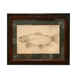 Jake Schneider – Trout Pencil Drawing