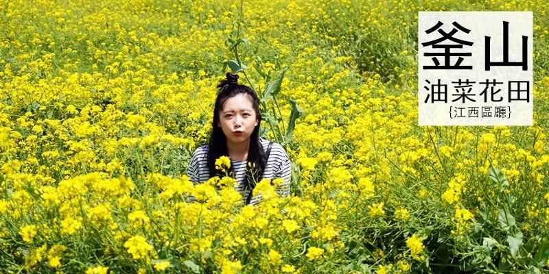 釜山油菜花田|2016自由行景點 大渚生態公園대저생태공원
