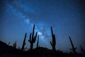 Night sky with cacti