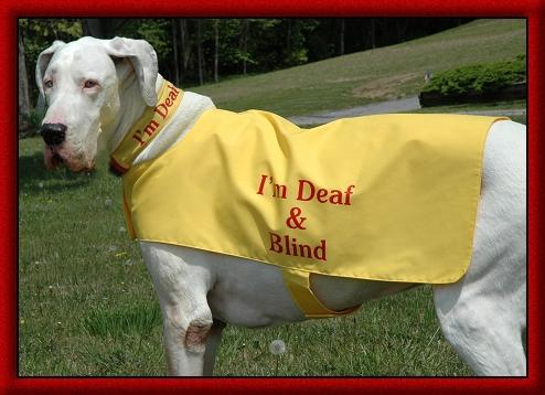 deafblindcoataspen