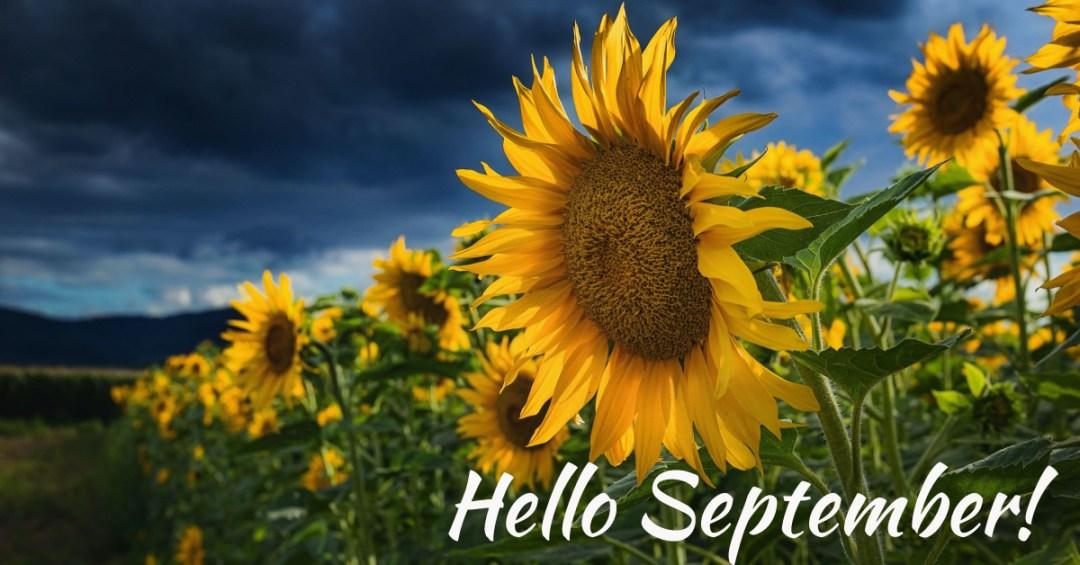 Sunflowers Hello September