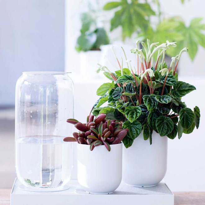 Pflanze-des-Monats-4