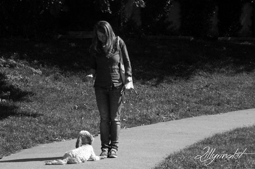 dog walker training a cockapoo at the park