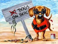 spiaggia per cani portogallo