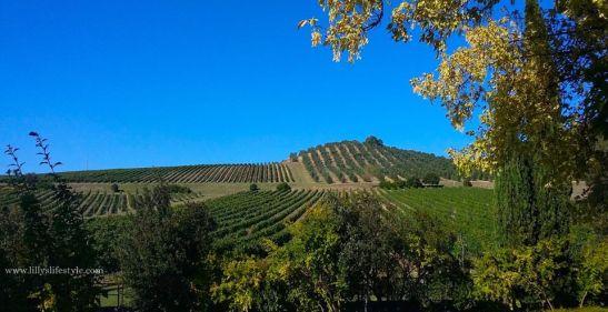 vigne-banfi-vino