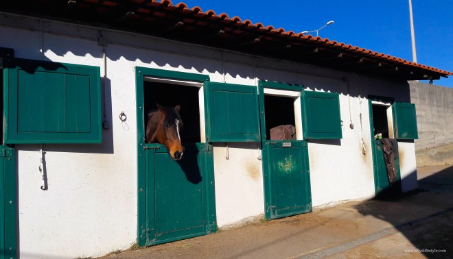 ippodromo cavalli lisbona