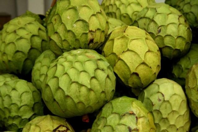 Risultati immagini per fruta anona azzorre