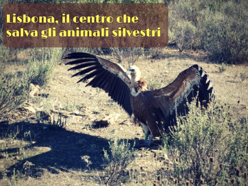 centro riabilitazione animali lisbona
