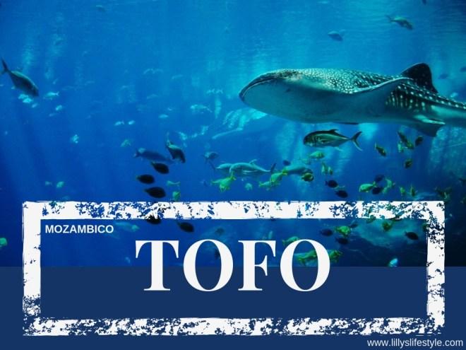 immersione tofo mozambico