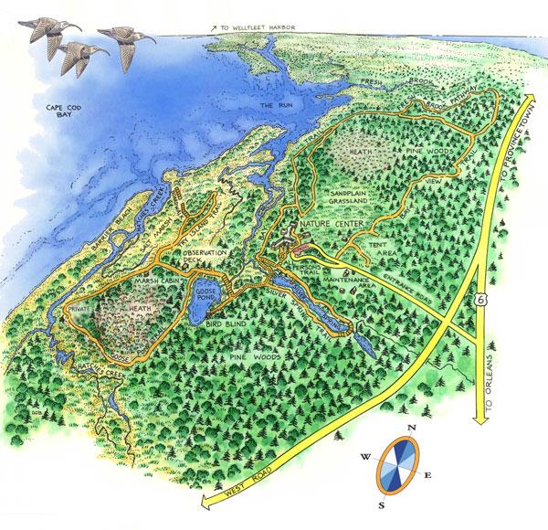 riserva naturale Wellfleet