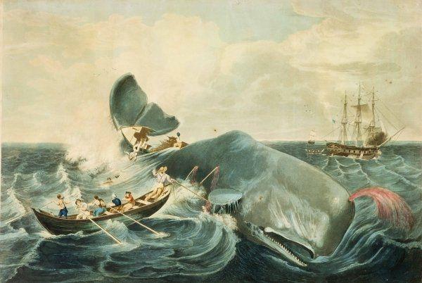 caccia balene azzorre