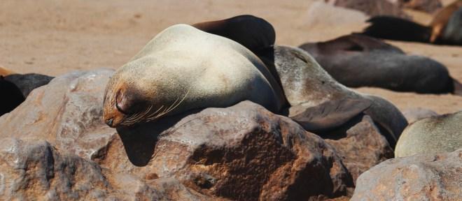 dove vedere le foche a cape cod USA