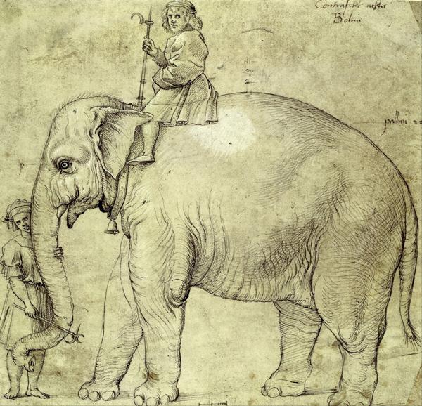 elefante portoghese disegnato da raffaello
